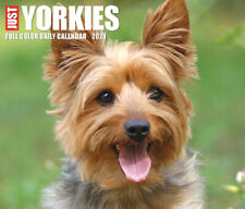 Just Yorkies (dog breed calendar) 2021 Box Calendar (Free Shipping)