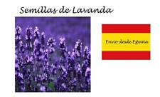 Lavanda morada semillas 200 aprox. Lavandula officinalis purpura sobre cerrado