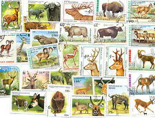 Horned Animals-50 all different collection interesting packet large