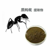 100% PURE & WILD Mountain Ant Vic. Roger Polyrhachis 20:1 Extract powder 200g