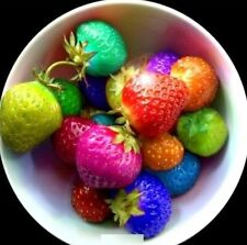Fruit Seeds Rainbow Strawberry Seeds Colorful Strawberry Seeds 100PCs ☆