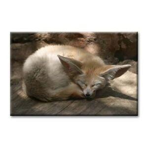 """cc art- CANVAS PRINT ARTWORK- LONG EARED FOX -24""""x36"""""""