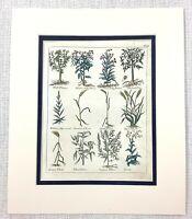 1810 Antico Botanico Incisione Grano Piante Salice Noce Albero Mano Colorato