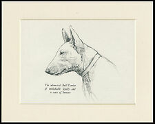 BULL TERRIER HEAD STUDY OLD 1930'S DOG SKETCH PRINT by KF BARKER READY MOUNTED