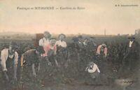 CPA - Vendanges en BOURGOGNE  - DRACY - Cueillette du Raisin