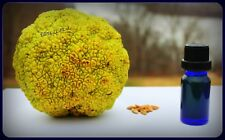 Cold-Pressed Maclura Pomifera ~ Osage Orange 100% Natural Vegan Essential Oil