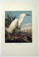 John James Audubon Snowy Heron or White Egret - 1971-1972 Amsterdam Edition 250