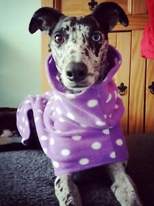 dog Snood jumper fleece house coat whippet greyhound lurcher purple spot 26""