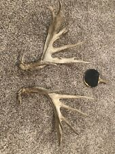 Enormous Whitetail Deer Shed Antler Set