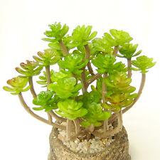 Artificial Succulent 34 Heads Without Pot Desert Plant Grass Garden Home Decor