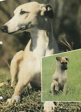 WHIPPET - Information Articles - The World of Dogs **VERY GOOD COPIES**