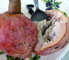 Annona Reticulata - Custard Apple - Rare Tropical Plant Tree Seeds (5)