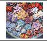 100PCS Mix Succulent seeds lotus Lithops Pseudotruncatella Bonsai Rare Succulent