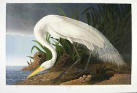 Audubon  - Ltd. Ed. Loates Great White Egret Print Signed