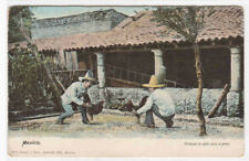 Cock Fight Fighting Mexico 1910c postcard
