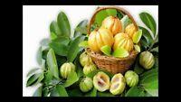 Pure Dried Garcinia Cambogia 100 gm - free Shipping - 100 % Natural