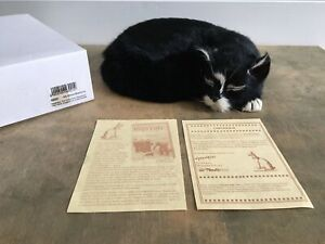 Taxidermy Ship's Cat Nauticalia 'Simon' The Black Cat