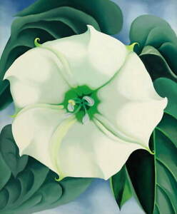 Georgia O'Keeffe Jimson Weed Giclee Art Paper Print Poster Reproduction