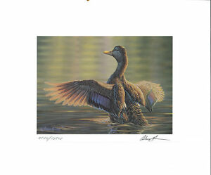 RW67 2000 FEDERAL DUCK STAMP PRINT GMOTTLED DUCK by Adam Grimm
