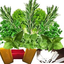 HERB GARDEN SEEDS KIT 15 PACKETS HERB SEED 15 PUNNETS 15 LABELS