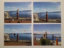 Shore Birds in SIDNEY BC VANCOUVER ISLAND CANADA GLASS BEACH  4 Postcard Set