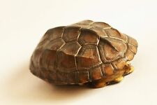 Asia Natural Turtle Shell Taxidermy for arts & crafts #SM01