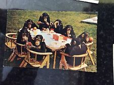 a2m postcard unused chimps tea party unknown zoo undated
