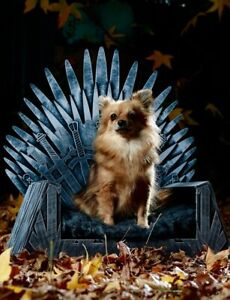 Pica Ice Throne Dog Bed + Custom Name