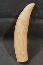 #4 Imitation Whale Tooth, Replica Scrimshaw Engraving polyurethane