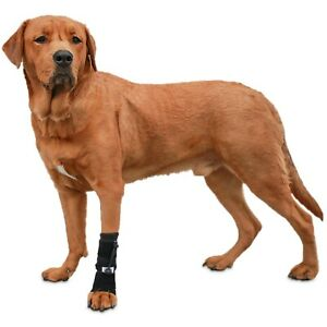Walkin' Front No-Knuckling Training Sock | Helps Dogs Pick up Their Feet