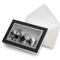 Greetings Card (Black) BW - Cows Dairy Cattle Cow  #36077