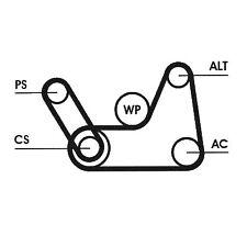 Contitech V Ribbed Drive Belt Kit Ford Fiesta V Mk5 1.25 16V 1.6 16V 1.4 16V