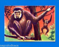 ANIMALI - Lampo 1964 - Figurina-Sticker n. 37 - GIBBONE -New