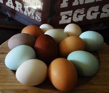 10 bunte Bio Eier Marans, Araucana, Bresse Gauloise, keine Bruteier
