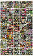 300 semi assortiti di cactus, 3 confezioni da 100 semi di cactus in mix a scelta