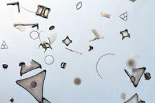 Diatom RAW sample B2 Hanklit Mors denmark Microscope Diatoms diatomite fossil