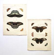 2 Pieter Cramer Gerrit Wartenaar Hand Colored Butterfly Engravings, 18th C Dutch