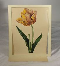 Antique Fine Watercolor Painting of A Tulip Chinese Export Possibly Tiffany Type