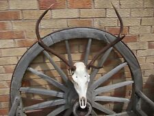 RED STAG DEER FULL SKULL ANTLER ANTLERS TAXIDERMY DISPLAY HOME DECOR