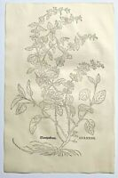 FUCHS  1543 Antique Woodcut Print - Wantzenkraut Botanical Herbal *VERY RARE*