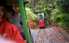 PHOTO  2000 NEW ZEALAND RAILWAY COROMANDEL DRIVING CREEK RAILWAY POSSUM NEAR GIR