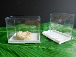 Large Perspex Display Specimen Boxes Die Casts Crystals Fossils Pack Of  4 Or 12