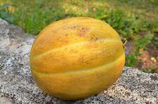 Bulgarische Honigmelone 10 Samen, Zuckermelone Saatgut