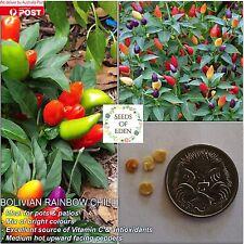 10 BOLIVIAN RAINBOW CHILLI SEEDS(Capsicum frutescens);Ornamental & Medium Hot