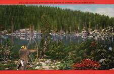 Big Game Hunting With Bow and Arrow at Mirror Lake, Utah -- Old Vintage Postcard