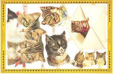Chromo Le Suh Chat Chaton Enveloppe A125 cat