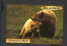 Alaska Joe Colour Postcard Grizzly Bear Protective Mum Alaska unposted