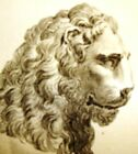 By Zanetti Greek Statues  LIONE DI MARMO Rare Antique Copper Engraving  1743