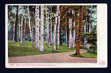 1904 Among the Birches Green Island Lake George New York postcard
