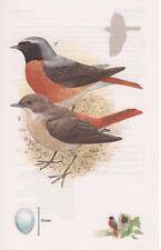 Colirrojo real-Británico Pájaro Vintage Década de 1970 bookprint Tim Hayward